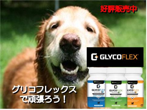 グリコフレックスは愛犬の関節を保護する強力なサプリメントです。